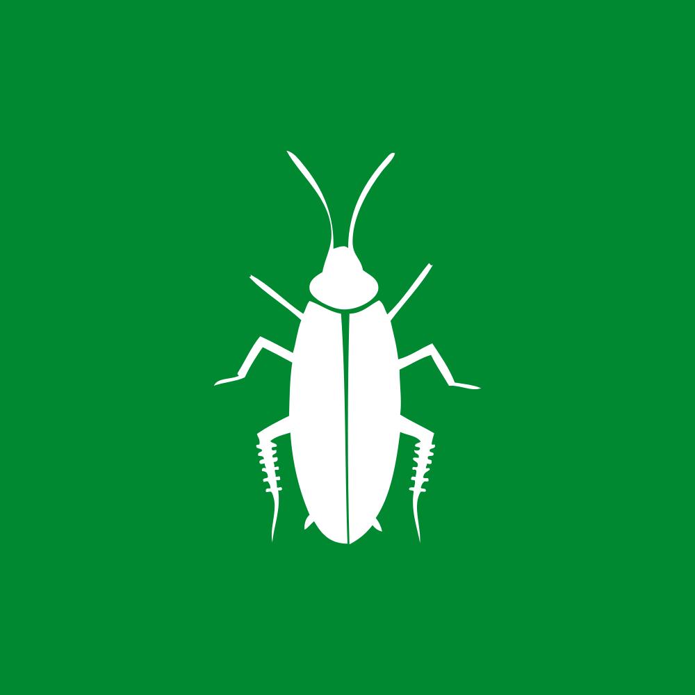 Schaben Küche | Schaben Kakerlaken Biotec Klute Gmbh
